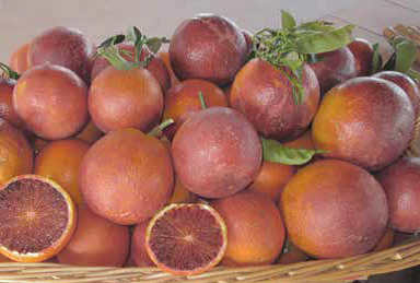 Tarocco fragolino